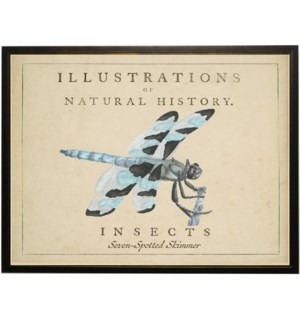 Watercolor Dragonfly on natural history background