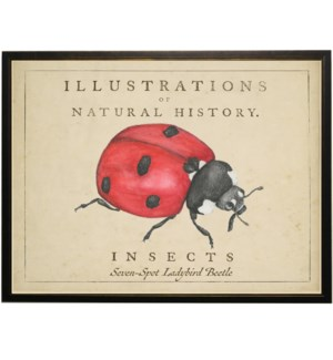 Watercolor Ladybug on natural history background
