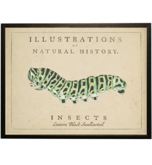 Watercolor Caterpillar on natural history background