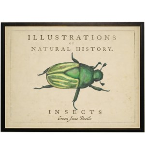 Watercolor Beetle on natural history background