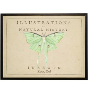 Watercolor Luna Moth on natural history background