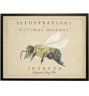 Watercolor Honey Bee on natural history background