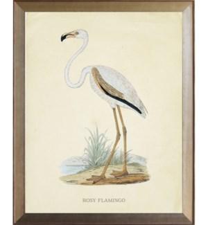 Rosy Flamingo