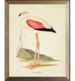 Flamingo with pink wing