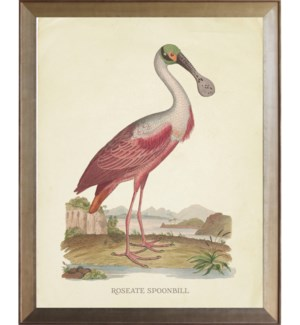 Roseate Spoonbill with green head