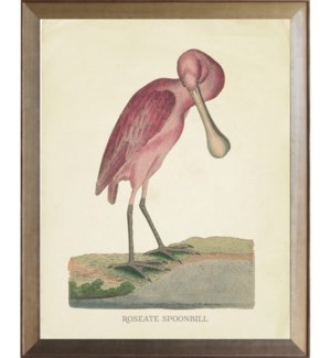 Roseate Spoonbill with bent neck