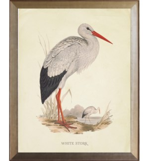 White Stork on brown land