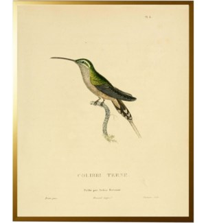 Light Green Hummingbird Plade 8