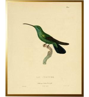 Hummingbird Plate 11