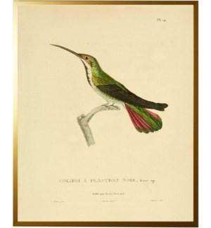 Hummingbird Plate 14