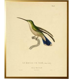 Hummingbird Plate 18