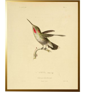Hummingbird Plate 7