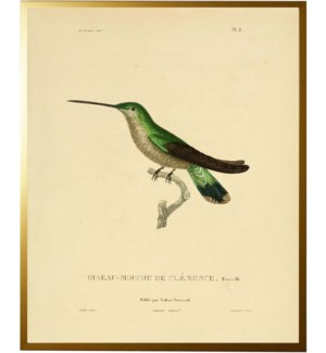 Dark Green Hummingbird Plate 8 facing right