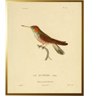 Hummingbird Plate 36