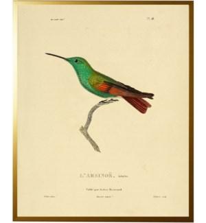 Hummingbird Plate 28 right