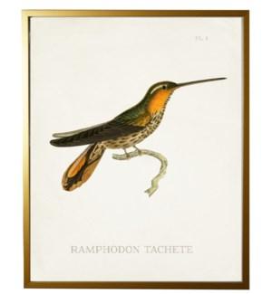 Hummingbird Plate 1 on white