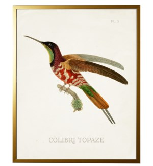 Hummingbird Plate 3 on white