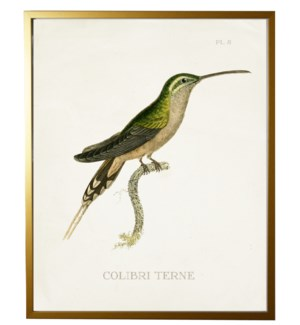 Hummingbird Plate 8 on white