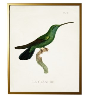 Hummingbird Plate 11 on white