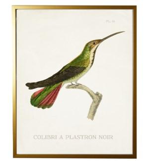 Hummingbird Plate 14 on white
