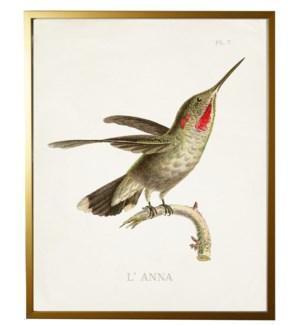 Hummingbird Plate 7 on white