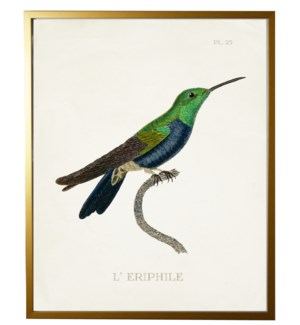 Hummingbird Plate 25 on white