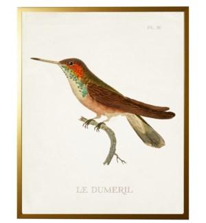 Hummingbird Plate 36 on white