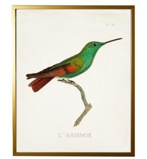Hummingbird Plate 28 on white