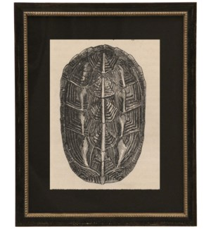 Black Matted Turtle Shell