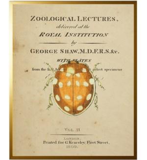 Beetle on titlepage