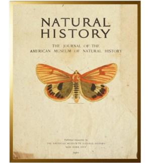 Moth on titlepage