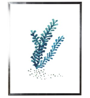 Dark-blue coral