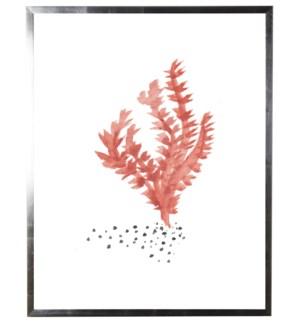 Orange/brown coral