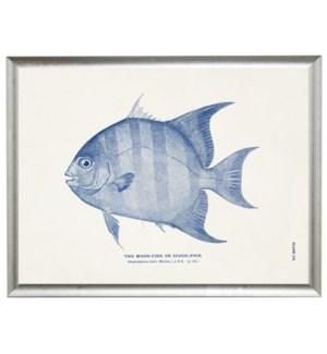 Moon-fish
