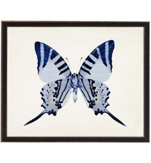 Dark Blue butterfly with light blue spots