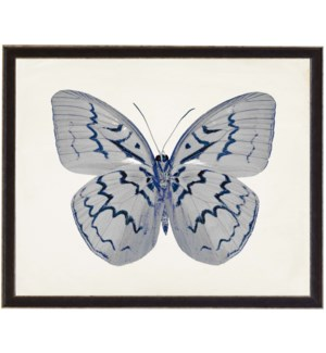 White Butterfly with Navy hilites