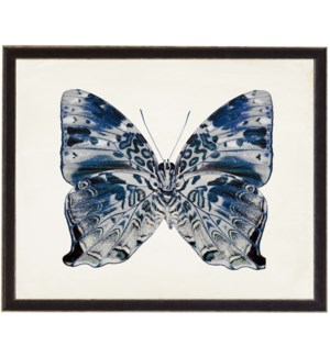 Blue and Grey butterfly
