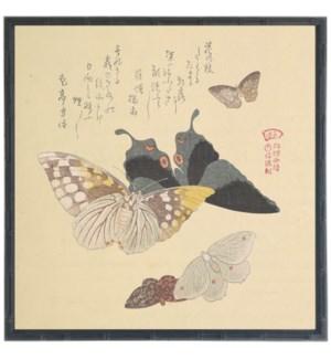 Asian butterfly B