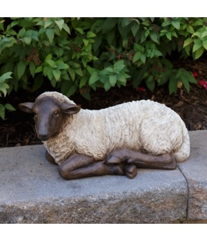 Sheep - Resting