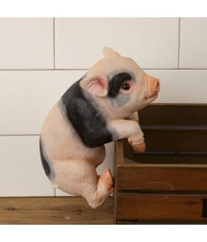 Pig - Hang on