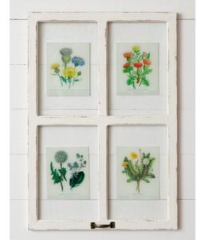 Window - Botanicals