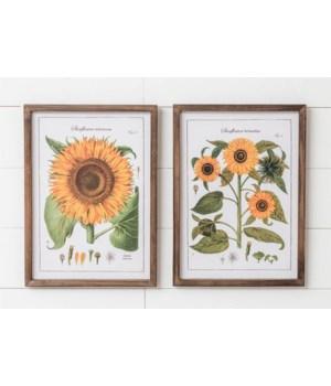 Framed Prints - Sunflower Botanicals