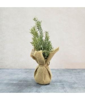 Snowy Pine Tree In Burlap Sack