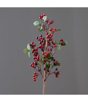Branch - Cranberries