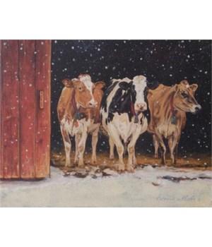 Canvas Print - Cows