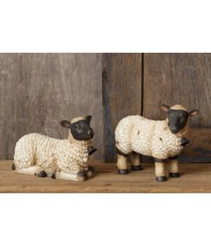 Sheep - Standing, Lying