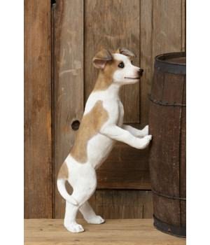 Dog - Jackie Standing On Hind Legs
