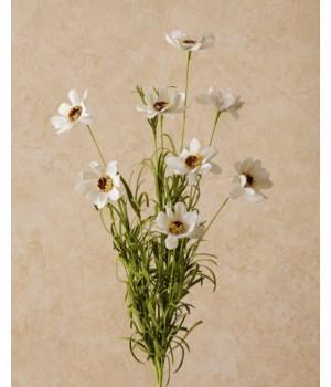 Spray - Coreopsis White