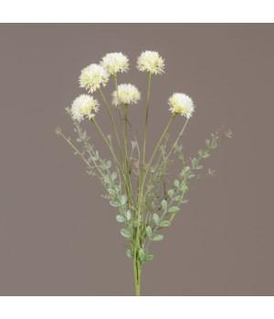 Pick - Cream Allium