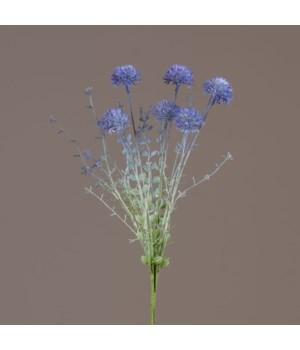 Pick - Blue Allium